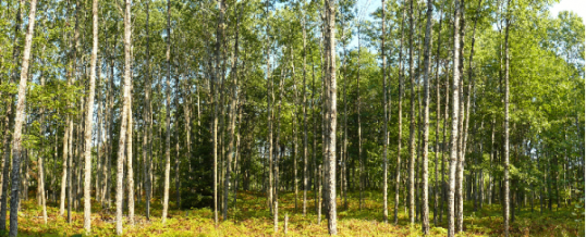 Why Not Just Take 50 Trees? – Michigan Forest Association